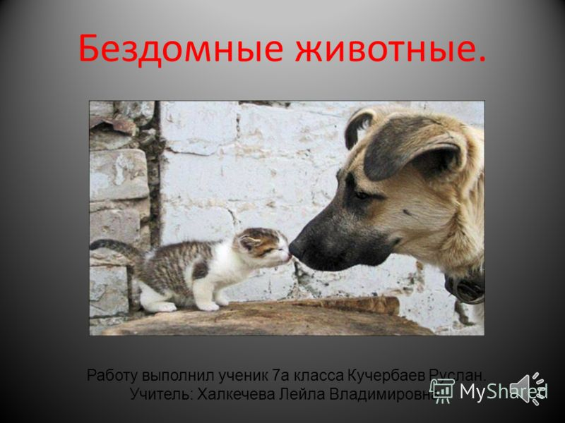 Бездомные животные. Работу выполнил ученик 7а класса Кучербаев Руслан. Учитель: Халкечева Лейла Владимировна.
