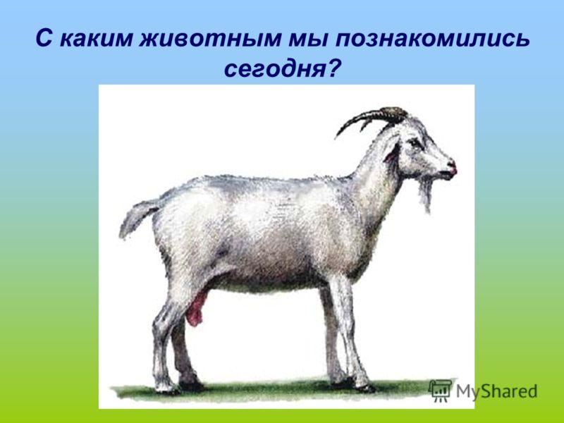 С каким животным мы познакомились сегодня?