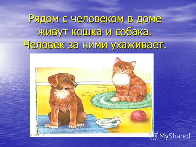 Рядом с человеком в доме живут кошка и собака. Человек за ними ухаживает.