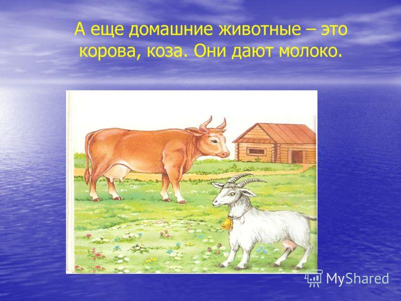 Лошадь и овца тоже домашние жи-:ные >е :