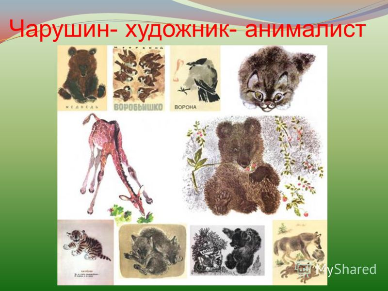 Чарушин- художник- анималист