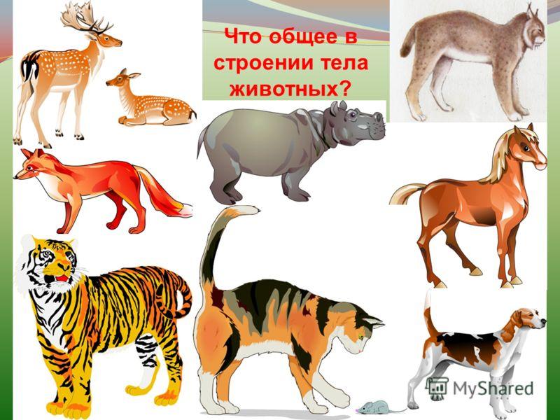 Что общее в строении тела животных?