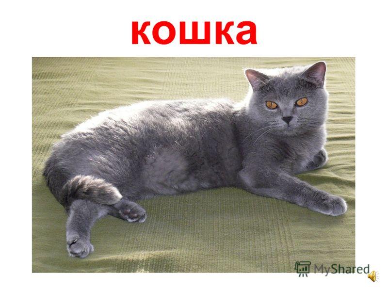 Домашние животные фото кот