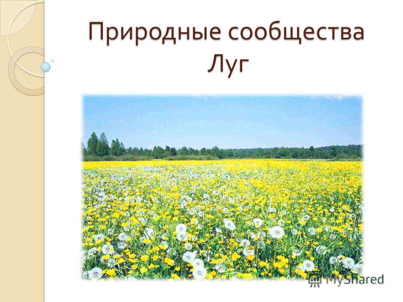 Природные сообщества Луг