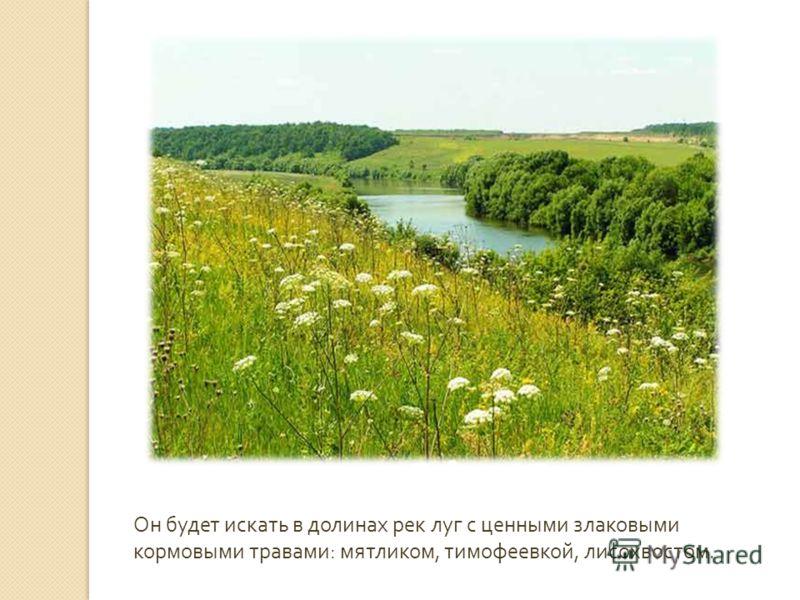 Он будет искать в долинах рек луг с ценными злаковыми кормовыми травами : мятликом, тимофеевкой, лисохвостом.