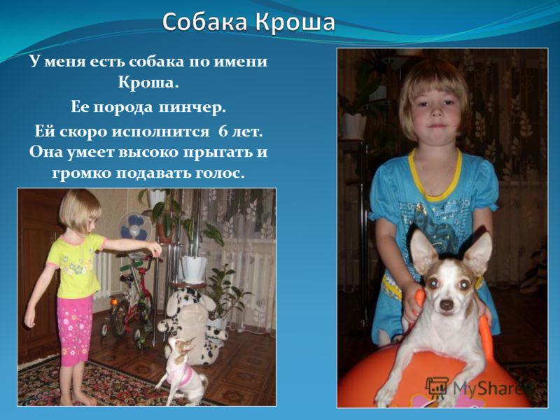 У меня есть собака по имени Кроша. Ее порода пинчер. Ей скоро исполнится 6 лет. Она умеет высоко прыгать и громко подавать голос.