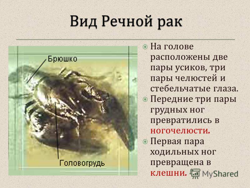 На голове расположены две пары усиков, три пары челюстей и стебельчатые глаза. Передние три пары грудных ног превратились в ногочелюсти. Первая пара ходильных ног превращена в клешни.