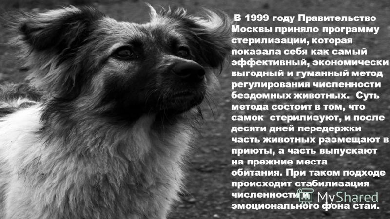 В 1999 году Правительство Москвы приняло программу стерилизации, которая показала себя как самый эффективный, экономически выгодный и гуманный метод регулирования численности бездомных животных. Суть метода состоит в том, что самок стерилизуют, и пос
