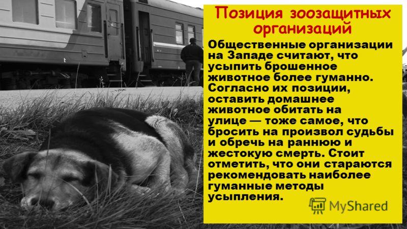 Позиция зоозащитных организаций Общественные организации на Западе считают, что усыпить брошенное животное более гуманно. Согласно их позиции, оставить домашнее животное обитать на улице тоже самое, что бросить на произвол судьбы и обречь на раннюю и