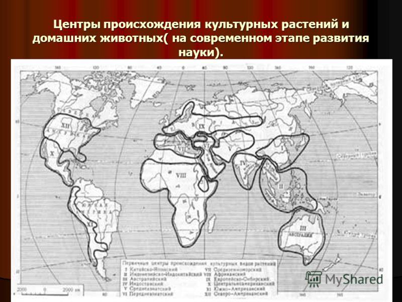 Центры происхождения культурных растений и домашних животных( на современном этапе развития науки).