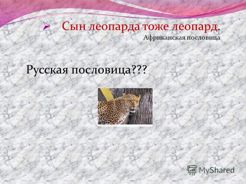 Сын леопарда тоже леопард. Африканская пословица Русская пословица???