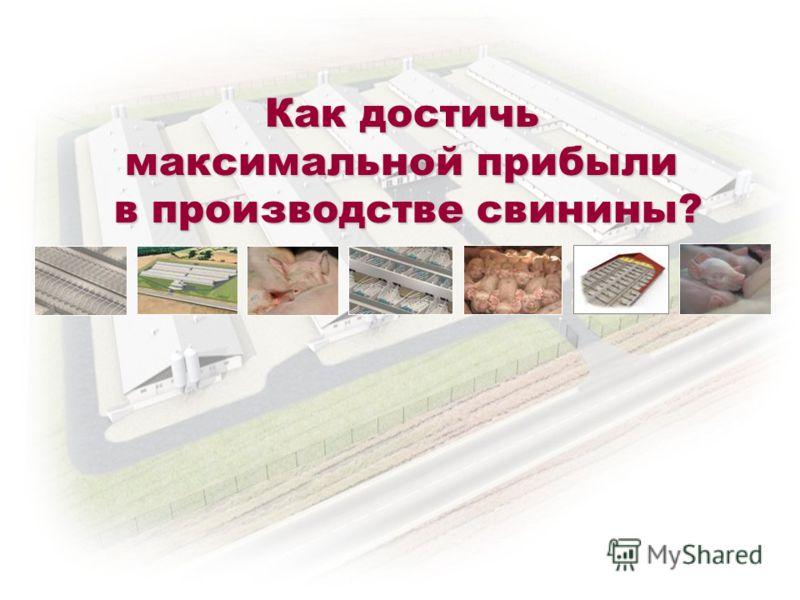 Как достичь максимальной прибыли в производстве свинины?