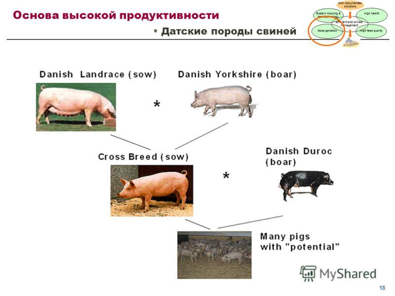 18 Основа высокой продуктивности Датские породы свиней Well documented solutions High health Good genetics High feed quality Efficient and skilled management Modern housing & best technology