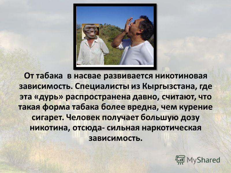 От табака в насвае развивается никотиновая зависимость. Специалисты из Кыргызстана, где эта «дурь» распространена давно, считают, что такая форма табака более вредна, чем курение сигарет. Человек получает большую дозу никотина, отсюда- сильная наркот