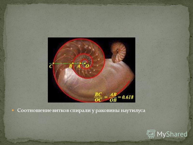 Соотношение витков спирали у раковины наутилуса