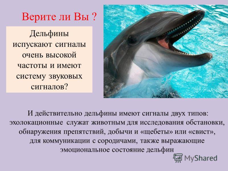Дельфины испускают сигналы очень высокой частоты и имеют систему звуковых сигналов? Верите ли Вы ? И действительно дельфины имеют сигналы двух типов: эхолокационные служат животным для исследования обстановки, обнаружения препятствий, добычи и «щебет