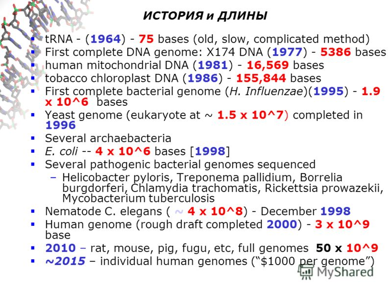 ИСТОРИЯ и ДЛИНЫ tRNA - (1964) - 75 bases (old, slow, complicated method) First complete DNA genome: X174 DNA (1977) - 5386 bases human mitochondrial DNA (1981) - 16,569 bases tobacco chloroplast DNA (1986) - 155,844 bases First complete bacterial gen