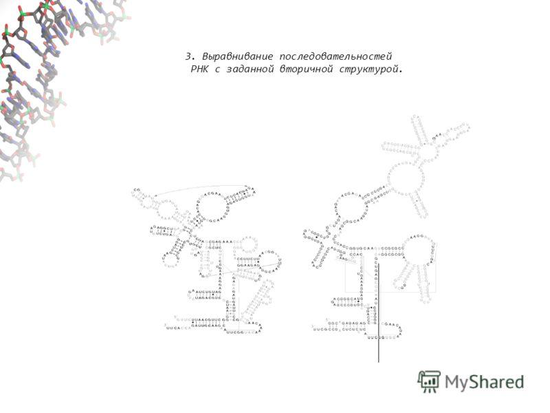 3. Выравнивание последовательностей РНК с заданной вторичной структурой.