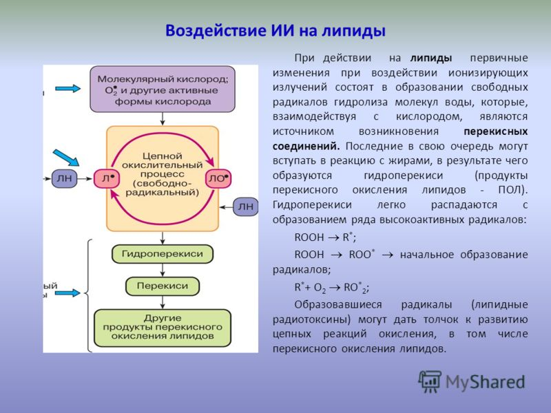 Воздействие ИИ на липиды При действии на липиды первичные изменения при воздействии ионизирующих излучений состоят в образовании свободных радикалов гидролиза молекул воды, которые, взаимодействуя с кислородом, являются источником возникновения перек