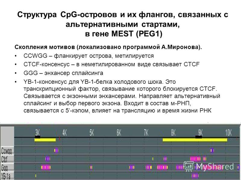 Структура CpG-островов и их флангов, связанных с альтернативными стартами, в гене MEST (PEG1) Скопления мотивов (локализовано программой А.Миронова). CCWGG – фланкирует острова, метилируется CTCF-консенсус – в неметилированном виде связывает CTCF GGG
