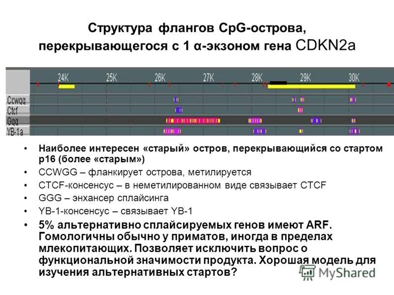 Структура флангов CpG-острова, перекрывающегося с 1 α-экзоном гена CDKN2a Наиболее интересен «старый» остров, перекрывающийся со стартом р16 (более «старым») CCWGG – фланкирует острова, метилируется CTCF-консенсус – в неметилированном виде связывает