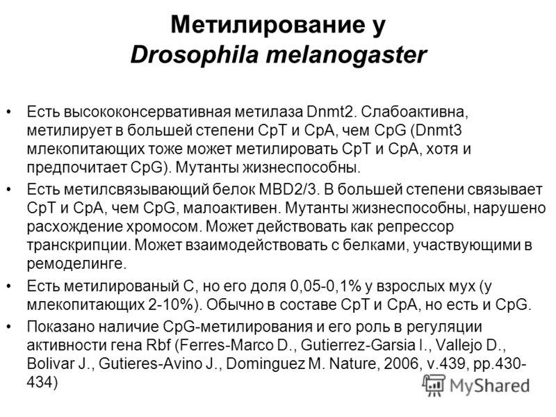 Метилирование у Drosophila melanogaster Есть высококонсервативная метилаза Dnmt2. Слабоактивна, метилирует в большей степени CpT и СрА, чем CpG (Dnmt3 млекопитающих тоже может метилировать CpT и СрА, хотя и предпочитает CpG). Мутанты жизнеспособны. Е