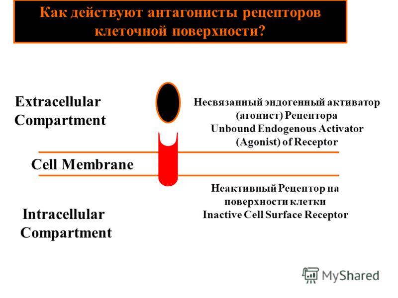 Как действуют антагонисты рецепторов клеточной поверхности? Cell Membrane Несвязанный эндогенный активатор (агонист) Рецептора Unbound Endogenous Activator (Agonist) of Receptor Неактивный Рецептор на поверхности клетки Inactive Cell Surface Receptor