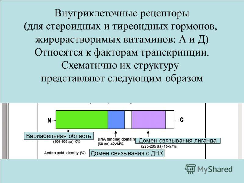 Внутриклеточные рецепторы (для стероидных и тиреоидных гормонов, жирорастворимых витаминов: А и Д) Относятся к факторам транскрипции. Схематично их структуру представляют следующим образом Вариабельная область Домен связывания с ДНК Домен связывания