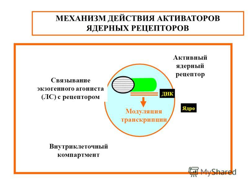 МЕХАНИЗМ ДЕЙСТВИЯ АКТИВАТОРОВ ЯДЕРНЫХ РЕЦЕПТОРОВ Внутриклеточный компартмент Ядро ДНК Модуляция транскрипции Активный ядерный рецептор Связывание экзогенного агониста (ЛС) с рецептором