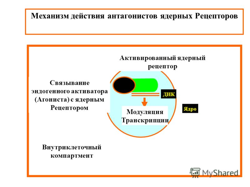 Механизм действия антагонистов ядерных Рецепторов Внутриклеточный компартмент Ядро ДНК Модуляция Транскрипции Активированный ядерный рецептор Связывание эндогенного активатора (Агониста) с ядерным Рецептором