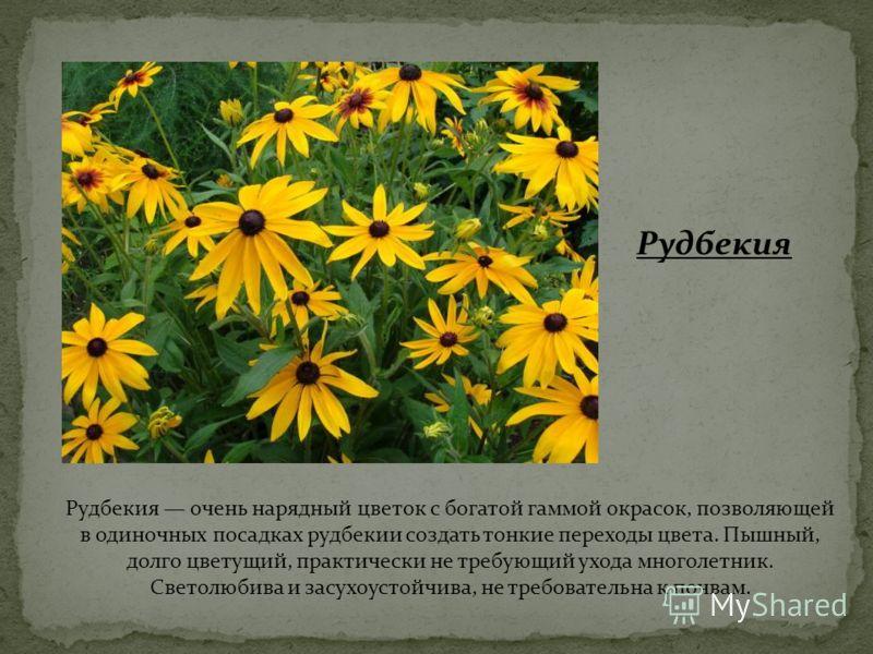 Рудбекия Рудбекия очень нарядный цветок с богатой гаммой окрасок, позволяющей в одиночных посадках рудбекии создать тонкие переходы цвета. Пышный, долго цветущий, практически не требующий ухода многолетник. Светолюбива и засухоустойчива, не требовате