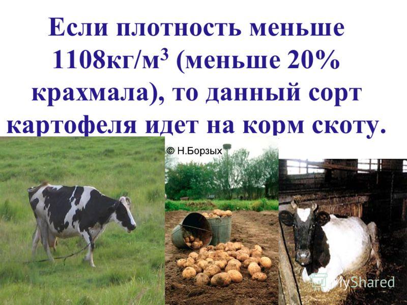 Если плотность меньше 1108кг/м 3 (меньше 20% крахмала), то данный сорт картофеля идет на корм скоту.