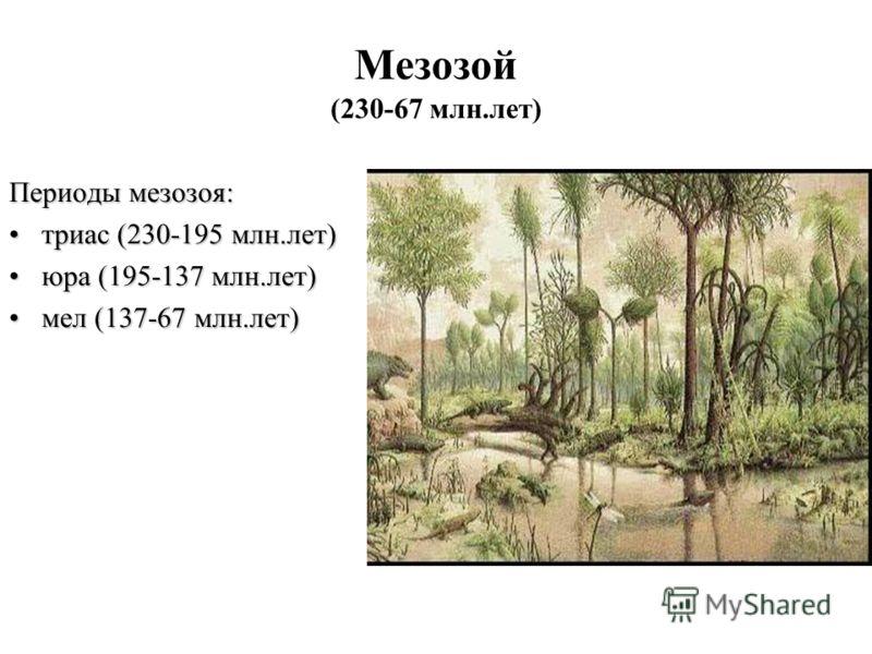 Мезозой (230-67 млн.лет) Периоды мезозоя: триас (230-195 млн.лет)триас (230-195 млн.лет) юра (195-137 млн.лет)юра (195-137 млн.лет) мел (137-67 млн.лет)мел (137-67 млн.лет)