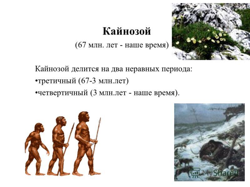 Кайнозой (67 млн. лет - наше время) Кайнозой делится на два неравных периода: третичный (67-3 млн.лет) четвертичный (3 млн.лет - наше время).