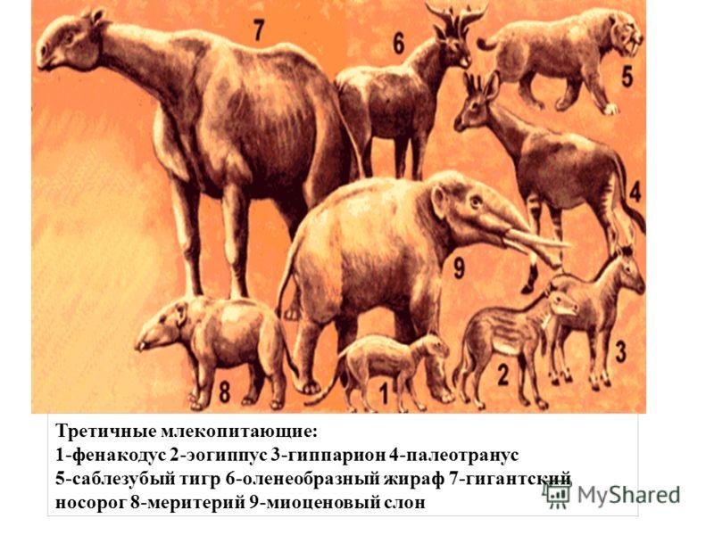 Третичные млекопитающие: 1-фенакодус 2-эогиппус 3-гиппарион 4-палеотранус 5-саблезубый тигр 6-оленеобразный жираф 7-гигантский носорог 8-меритерий 9-миоценовый слон