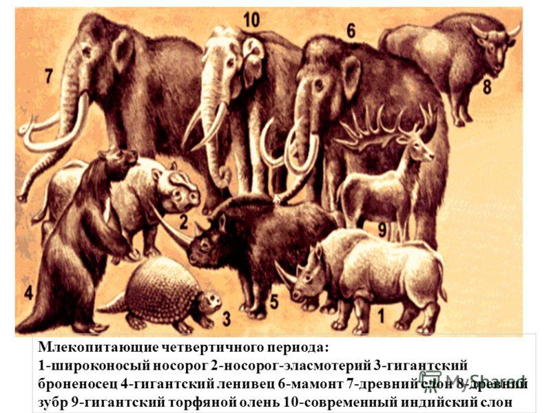 Млекопитающие четвертичного периода: 1-широконосый носорог 2-носорог-эласмотерий 3-гигантский броненосец 4-гигантский ленивец 6-мамонт 7-древний слон 8-древний зубр 9-гигантский торфяной олень 10-современный индийский слон