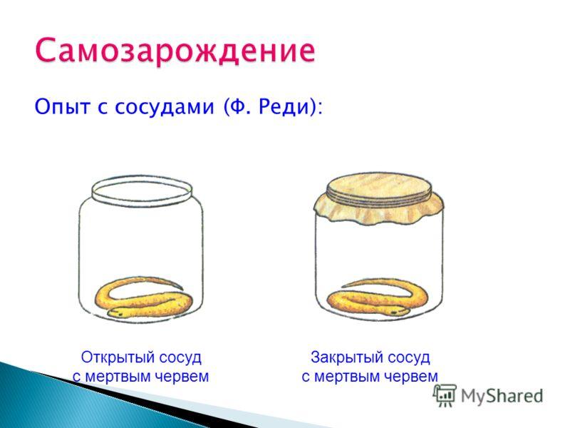 Опыт с сосудами (Ф. Реди): Открытый сосуд с мертвым червем Закрытый сосуд с мертвым червем