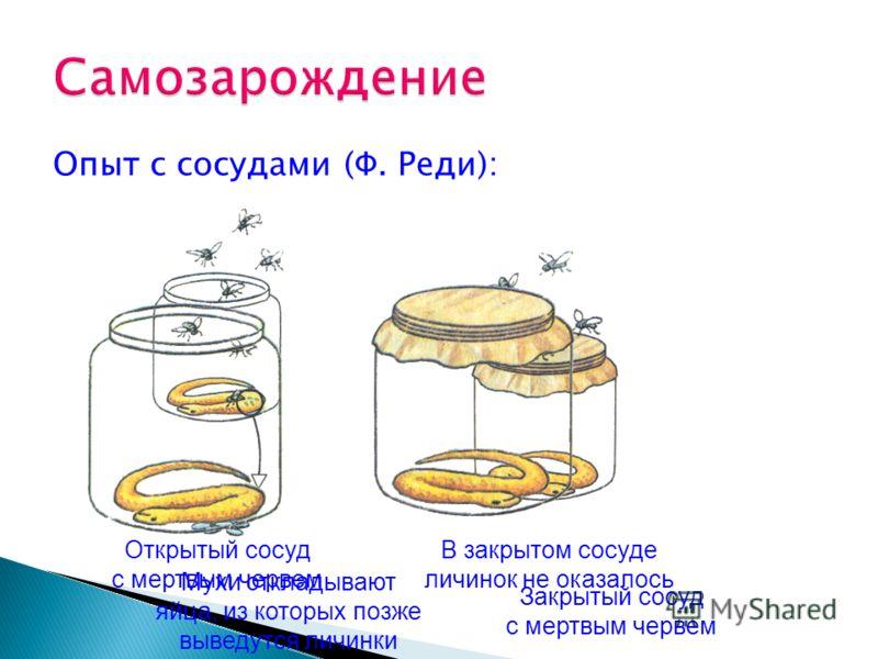 Опыт с сосудами (Ф. Реди): Мухи откладывают яйца, из которых позже выведутся личинки В закрытом сосуде личинок не оказалось Открытый сосуд с мертвым червем Закрытый сосуд с мертвым червем