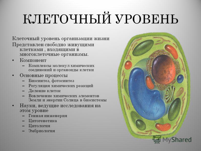 КЛЕТОЧНЫЙ УРОВЕНЬ Клеточный уровень организации жизни Представлен свободно живущими клетками, входящими в многоклеточные организмы. Компонент – Комплексы молекул химических соединений и органоиды клетки Основные процессы – Биосинтез, фотосинтез – Рег