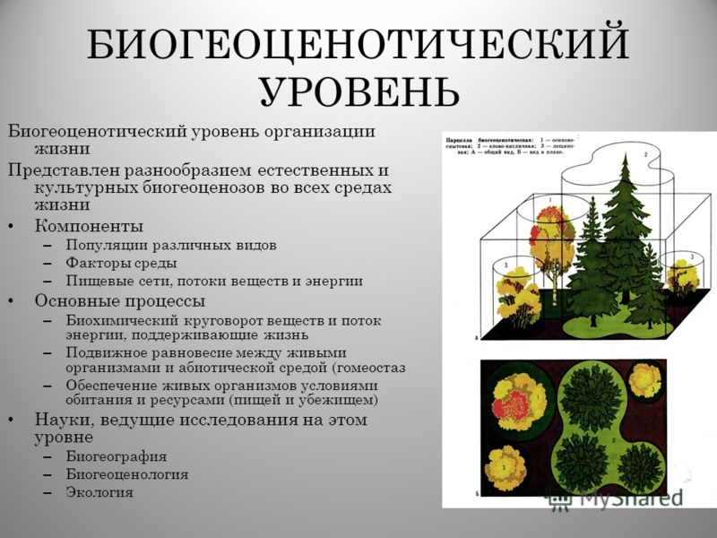 БИОГЕОЦЕНОТИЧЕСКИЙ УРОВЕНЬ Биогеоценотический уровень организации жизни Представлен разнообразием естественных и культурных биогеоценозов во всех средах жизни Компоненты – Популяции различных видов – Факторы среды – Пищевые сети, потоки веществ и эне