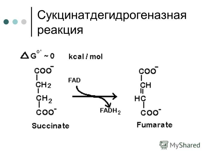 Сукцинатдегидрогеназная реакция