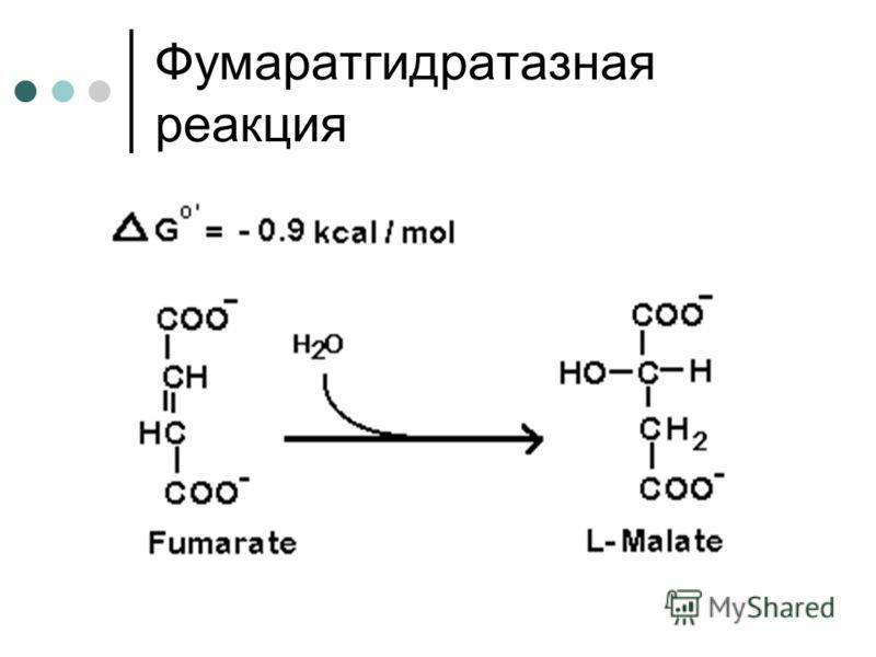Фумаратгидратазная реакция