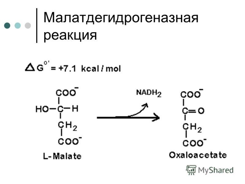 Малатдегидрогеназная реакция