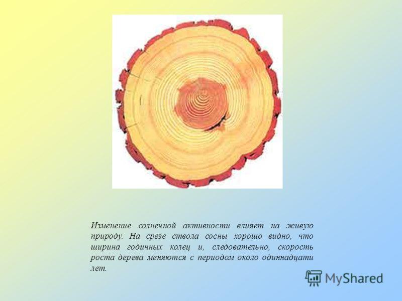 Изменение солнечной активности влияет на живую природу. На срезе ствола сосны хорошо видно, что ширина годичных колец и, следовательно, скорость роста дерева меняются с периодом около одиннадцати лет.