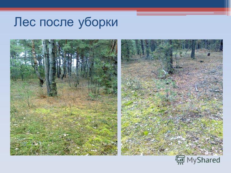 Лес после уборки