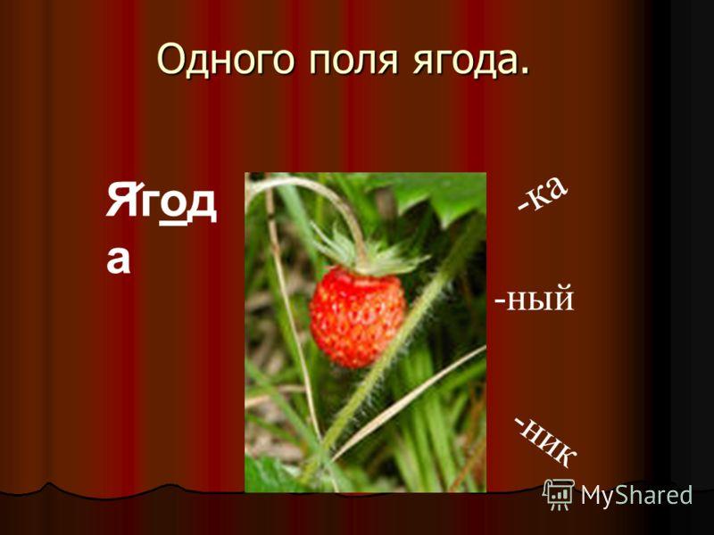 Одного поля ягода. Ягод а - к а - н и к -ный