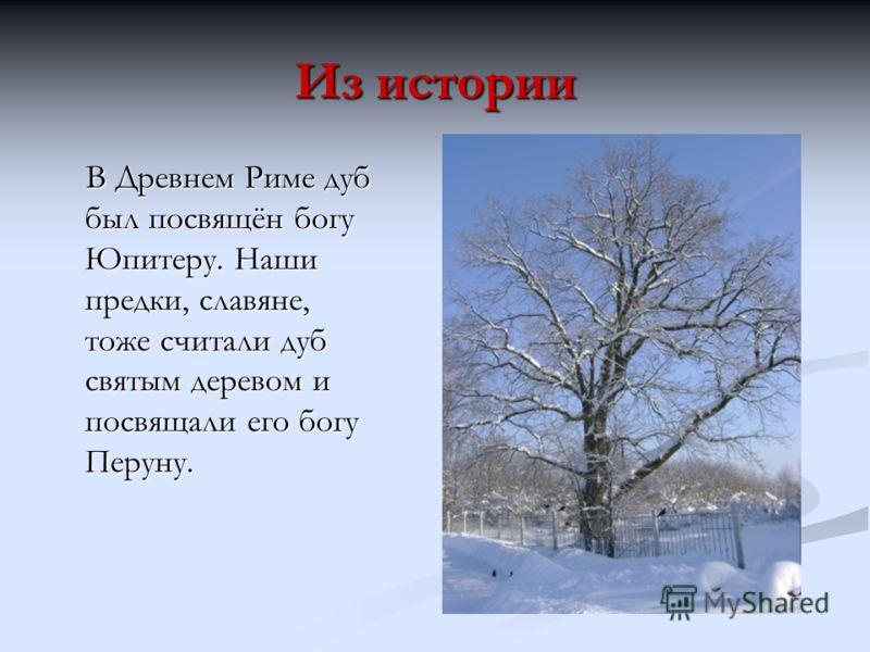 Из истории В Древнем Риме дуб был посвящён богу Юпитеру. Наши предки, славяне, тоже считали дуб святым деревом и посвящали его богу Перуну. В Древнем Риме дуб был посвящён богу Юпитеру. Наши предки, славяне, тоже считали дуб святым деревом и посвящал