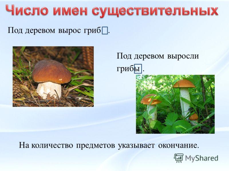 Под деревом вырос гриб. Под деревом выросли грибы. На количество предметов указывает окончание.