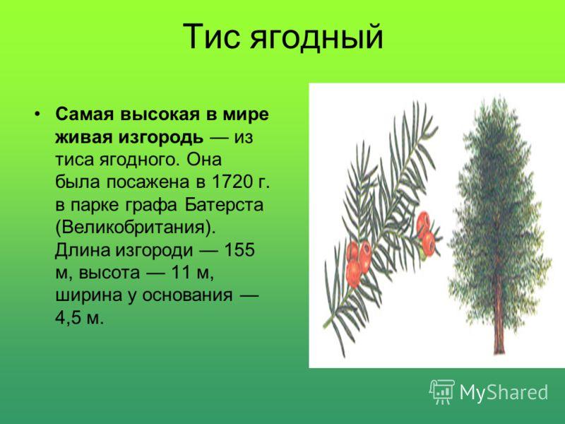 Тайга Самой большой поросшей лесом территорией в мире являются обширные хвойные леса (тайга) евроазиатской части России (между 55 с. ш. и Полярным кругом). Общая площадь тайги достигает 1 млрд. 100 млн. га, что составляет 28 % всех лесных запасов мир