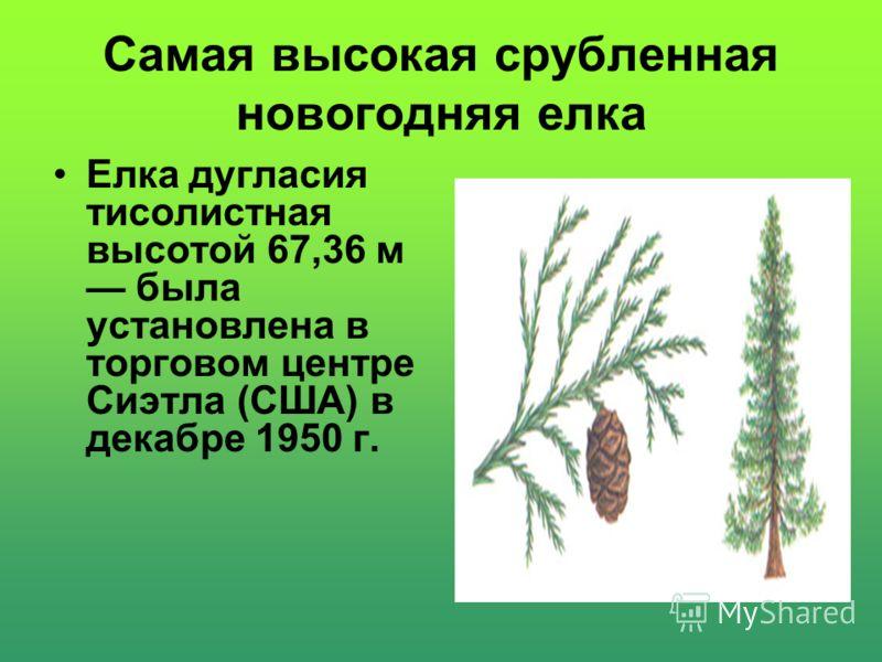 Самым массивным деревом на Земле является секвойя дендронгигантский. Хвоя дерева голубовато-зеленая, а красно-коричневая кора местами достигает в толщину 61 см. Высота отдельных деревьев до 80 м при диаметре стволов до 20 м. Расчетный вес составляет